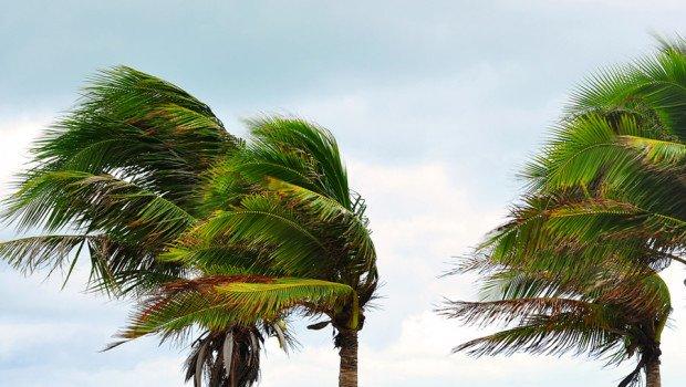 Cagliari, Maestrale a oltre 100 km/h. Cadono alberi e cornicioni
